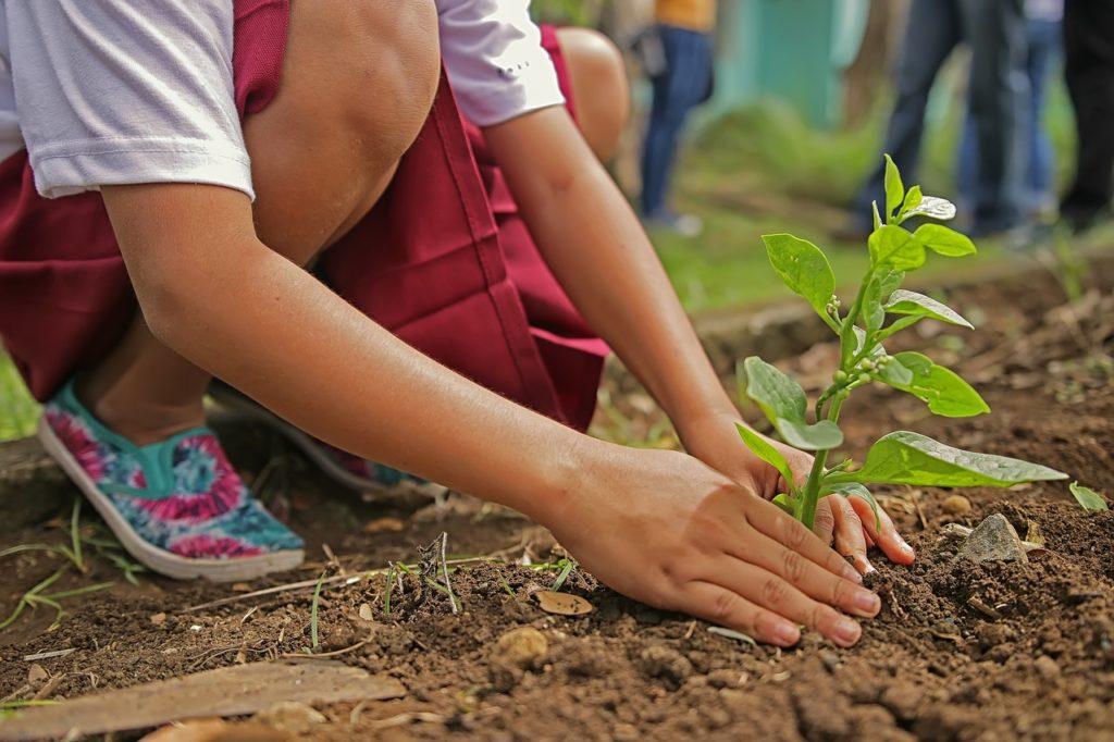 planting-1898946_1280