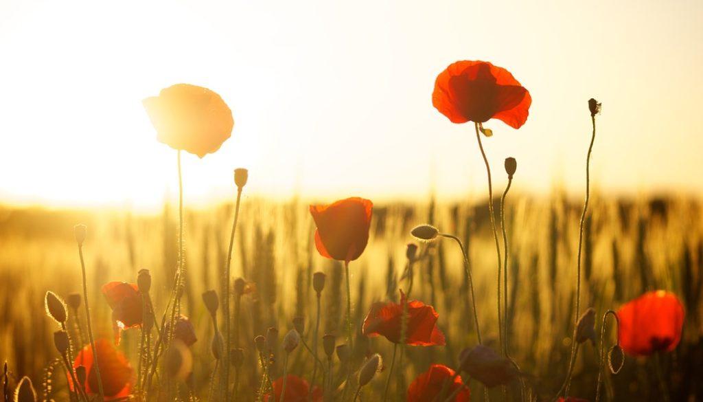 sunset-174276_960_720