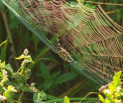 spider-3620191_960_720